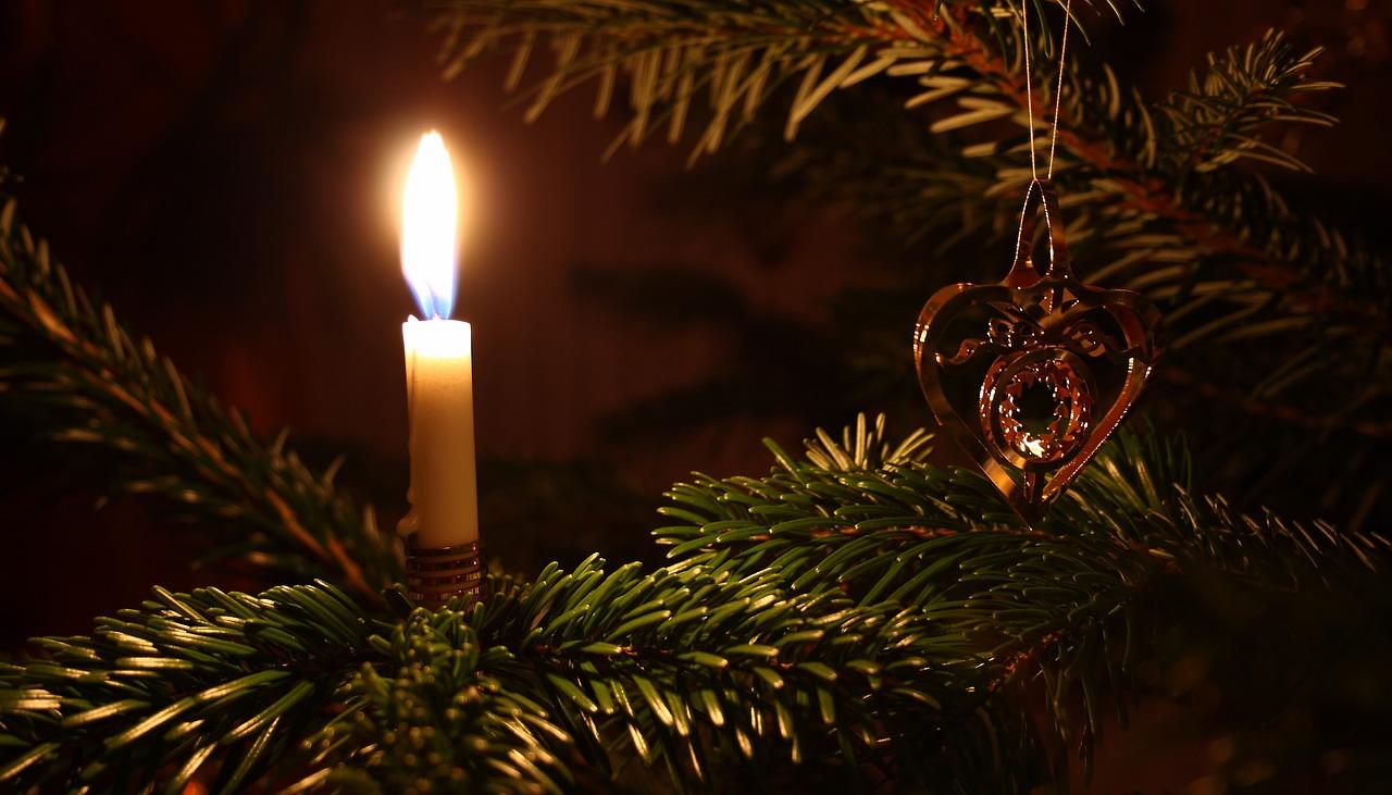 joulukuusi, voimapuu