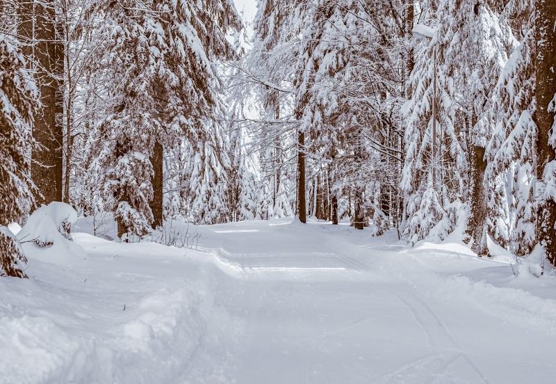 Metsamieli-voimaa luonnosta, Voimapuu