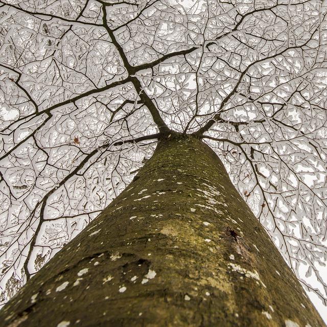 Mestämieli - voimaa luonnosta, Voimapuu
