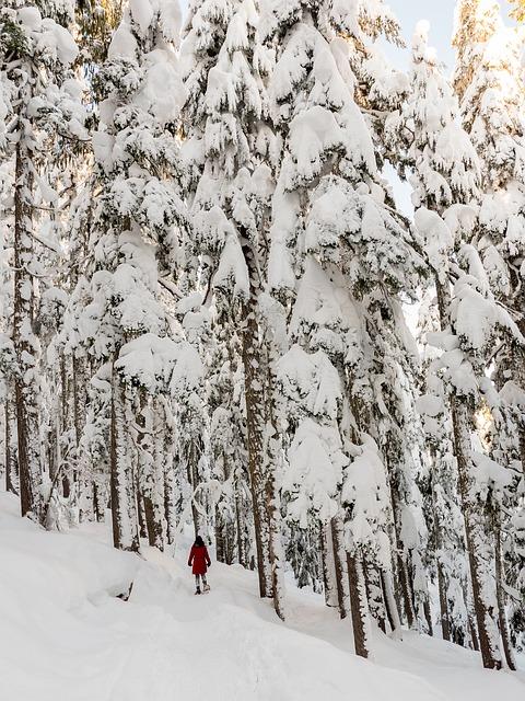 Metsamieli - Voimaa luonnosta, Voimapuu