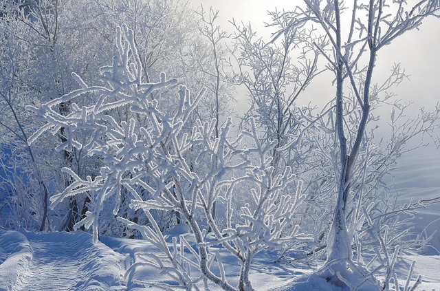 Metsämieli-voimaa luonnosta, Voimapuu
