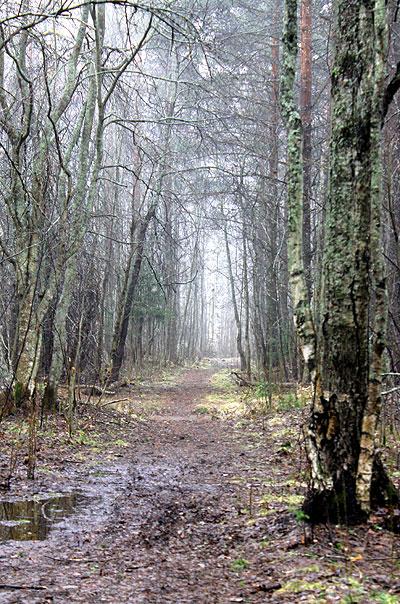 Metsämieli - voimaa luonnosta