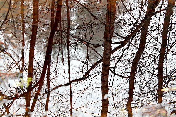 Metsämieli - voimaa luonnosta. Voimapuu