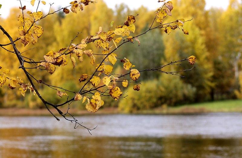 Voimaa metsästä - lähde luontopolulle! Voimapuu